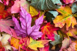 7 kleurentrends herfst en winter 2018/2019